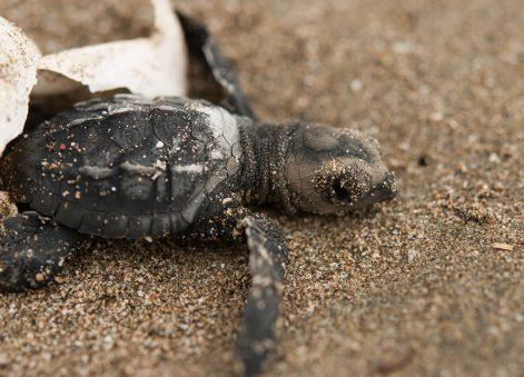 NatExplorers - tortue marine