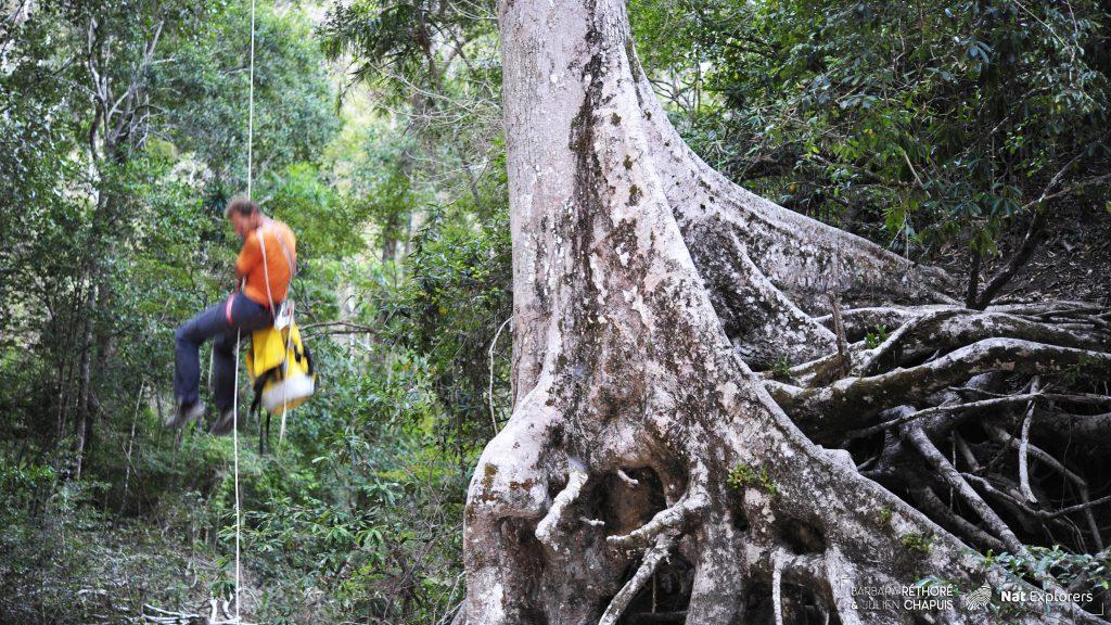 NatExplorers - Makay 2017 - grimpe d'arbre