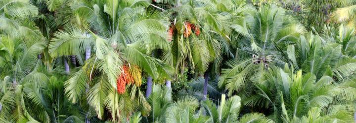Natexplorers-palmier