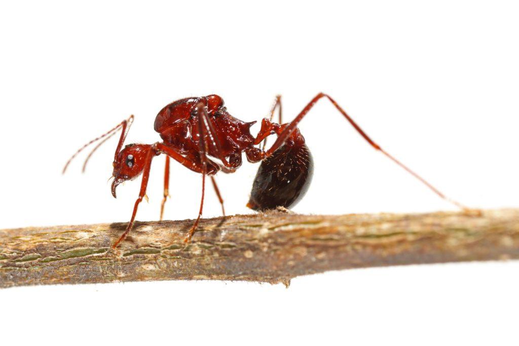 JFCart-fourmis
