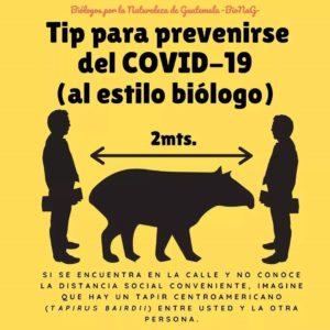 Coronavirus - tapir