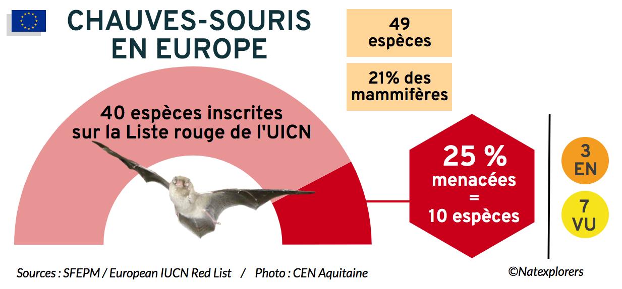 Chauves-souris slide Natexplorers (EU)