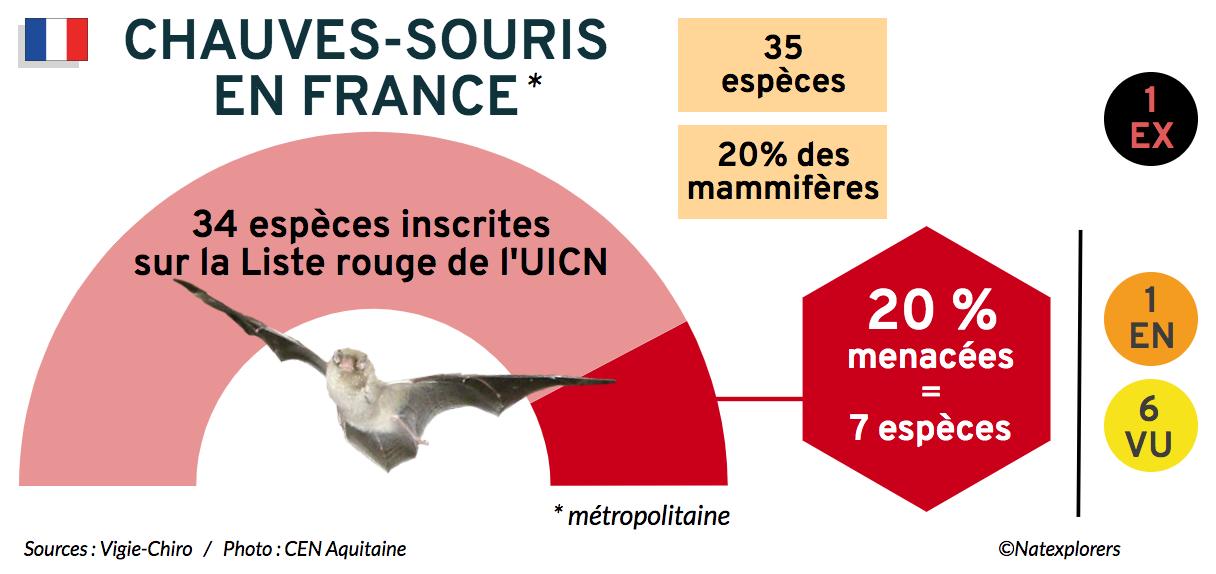 Chauves-souris slide Natexplorers (FR)