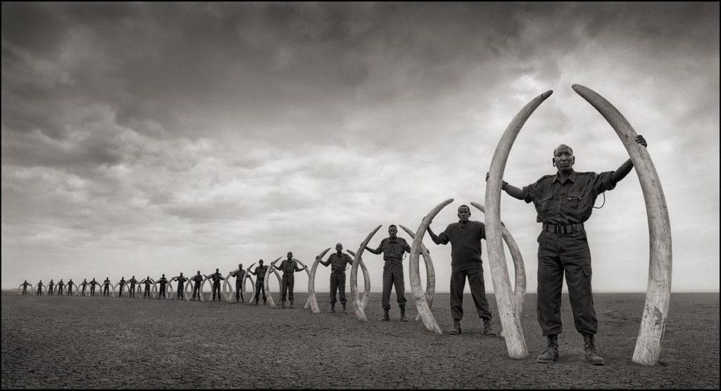 Extinction - Nick Brandt - rangers