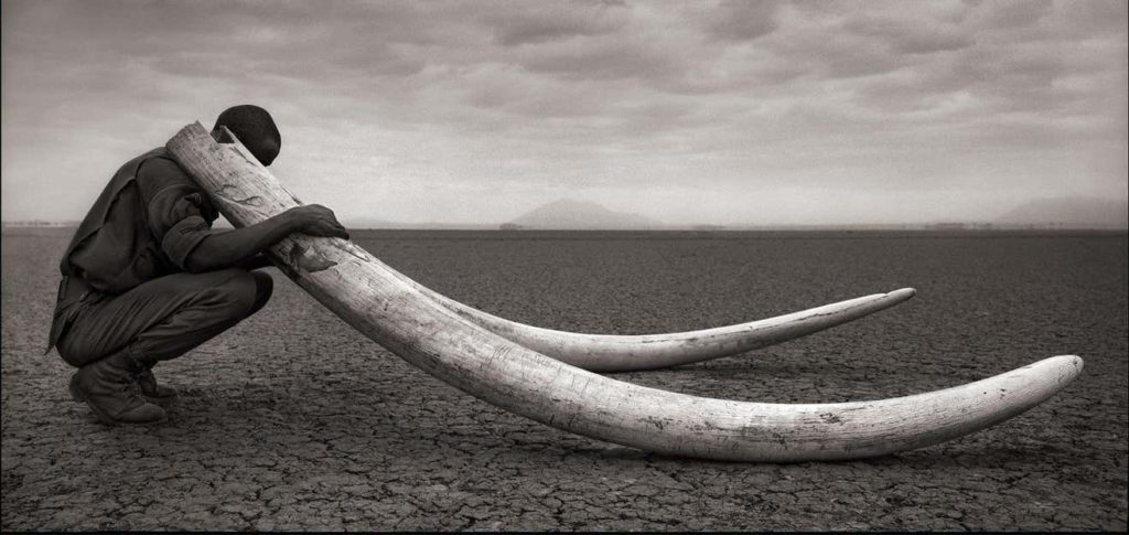Extinction - Nick Brandt - tusks